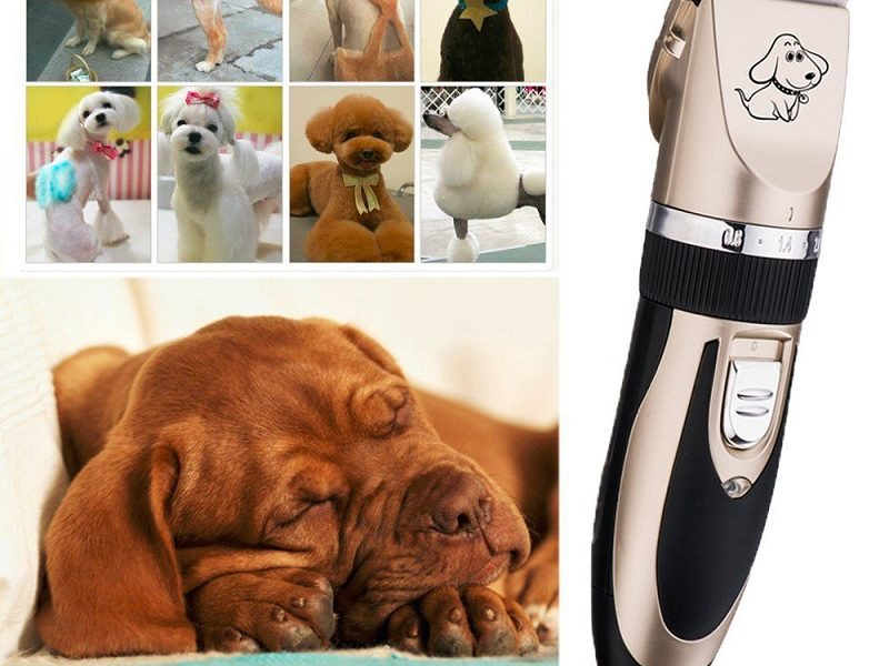dog-hair-clippers-vs-men-hair-clippers